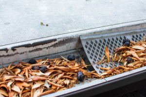 Rain,Gutter,Clogged,With,Leaves,And,Olives.,Damaged,Plastic,Mesh